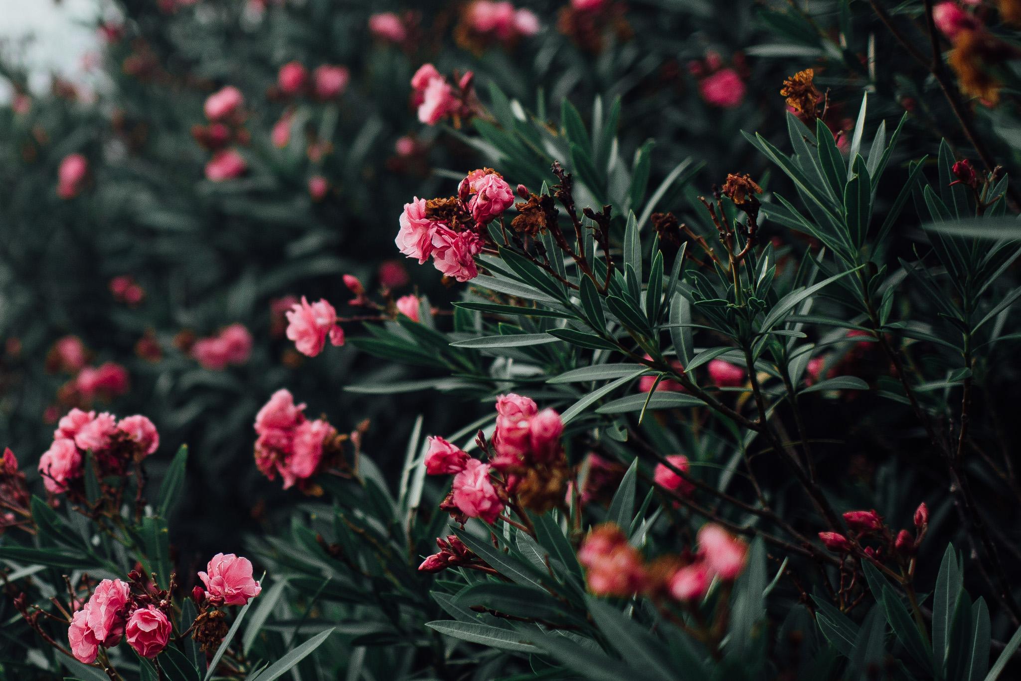 kayla-james-oleander-engagement-sydney