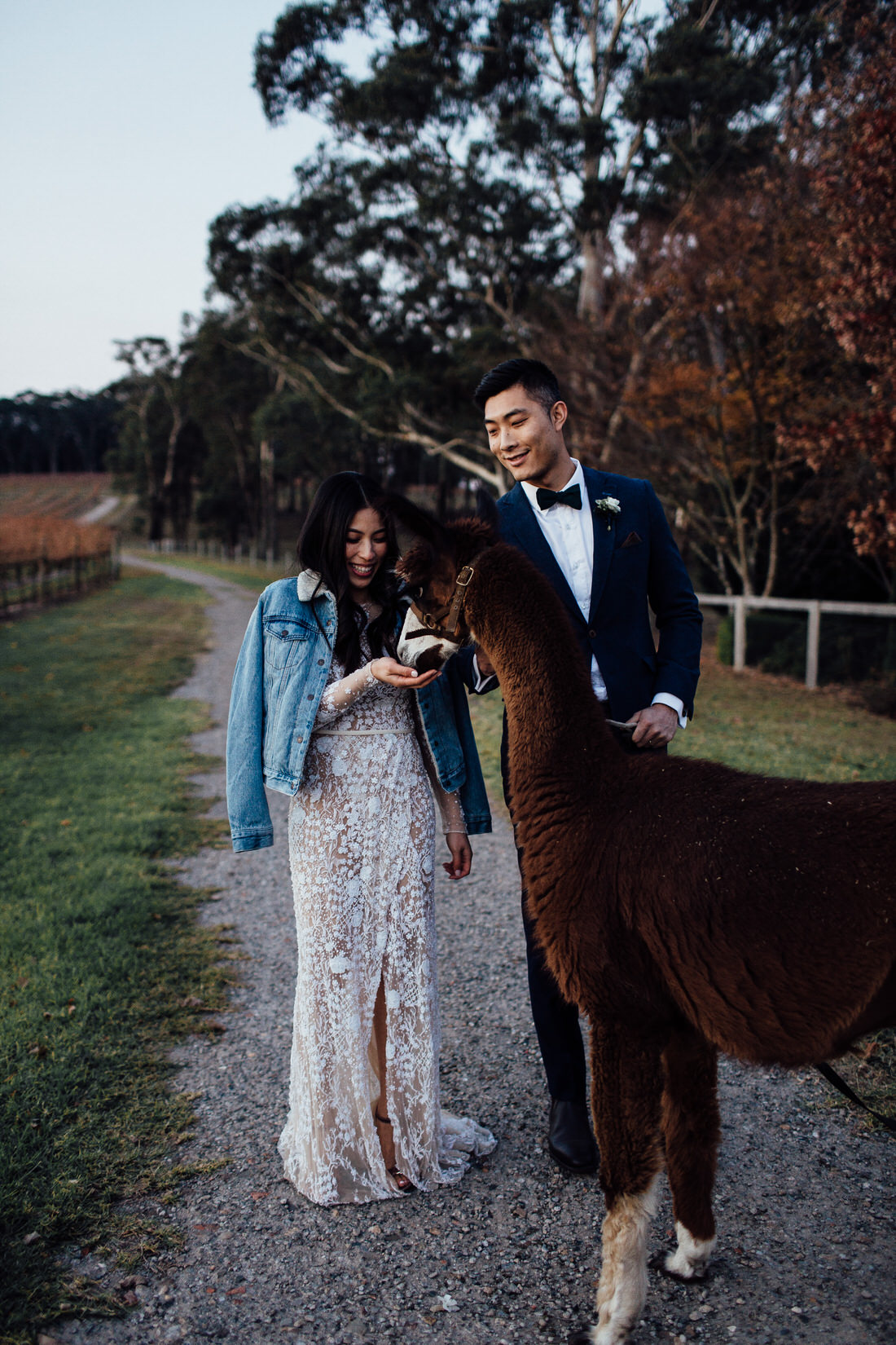 Centennial Vineyards wedding with bride and groom and alpaca
